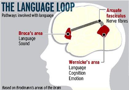 脳科学的に見たバイリンガル – アメリカで10倍うまく立ち回る ...
