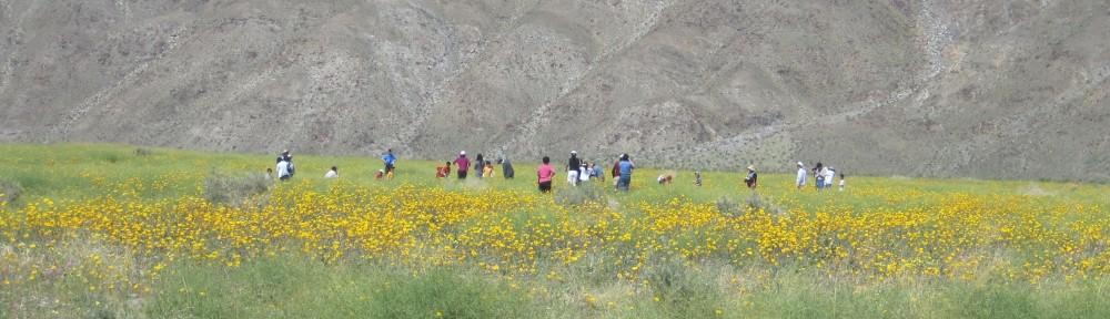 サンディエゴ 砂漠の花を見る休日